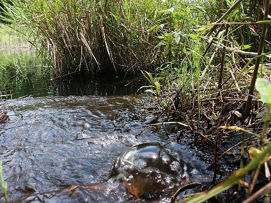 湿地からの湧水?